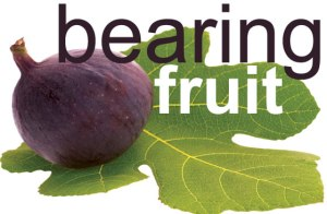 SLIDE 13 - Bearing_Fruit