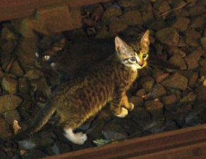 SLIDE 2 - Kittens on rail