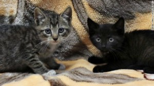 SLIDE 7 - Kittens