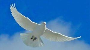 2017-1-8-slide-5-dove