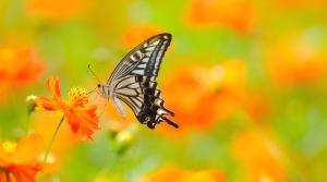 2017-1-8-slide-7-butterfly